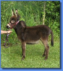 Lot #31 ~ Half Pint Hill Bambi